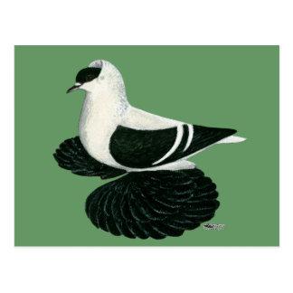 Swallow:  Saxon Black White Bar Postcard
