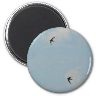 Swallows Birds Magnet