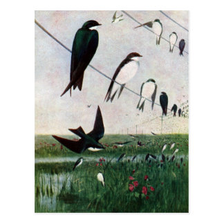 Swallows on a Power Line Postcard