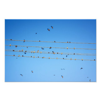 Swallows on wire photograph