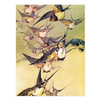 Swallows Postcard