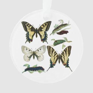 Swallowtail Butterflies, Caterpillars and Moth