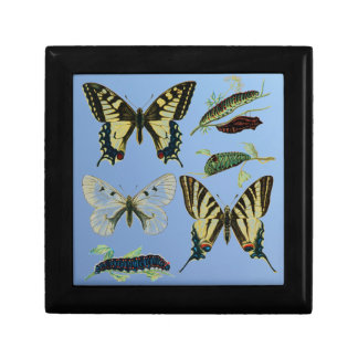 Swallowtail Butterflies, Caterpillars and Moth Small Square Gift Box