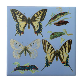 Swallowtail Butterflies, Caterpillars and Moth Small Square Tile
