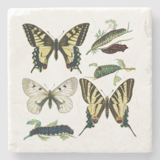 Swallowtail Butterflies, Caterpillars and Moth Stone Beverage Coaster