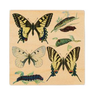 Swallowtail Butterflies, Caterpillars and Moth Wood Coaster