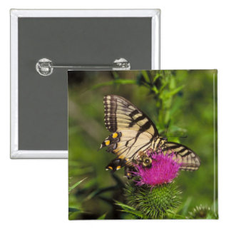 Swallowtail Butterfly and Bee on a Flower Pin