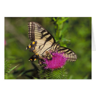 Swallowtail Butterfly and Bee on a Flower. Card