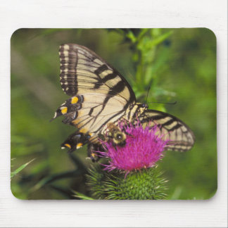 Swallowtail Butterfly and Bee on a Flower. Mouse Pad