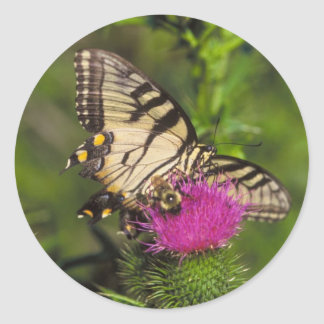 Swallowtail Butterfly and Bee on a Flower. Classic Round Sticker