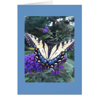 Swallowtail Butterfly Card 2