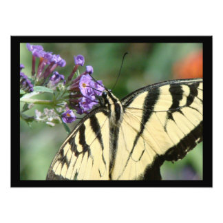 Swallowtail Butterfly Flower Floral Wildlife Photograph