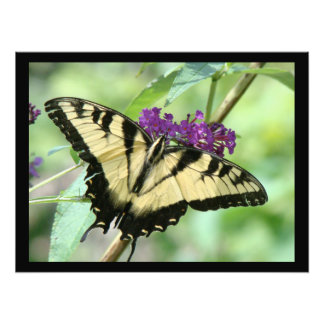 Swallowtail Butterfly Flower Floral Wildlife Photographic Print