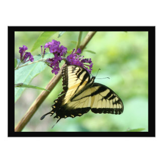 Swallowtail Butterfly Flowers Floral Wildlife Photo Art