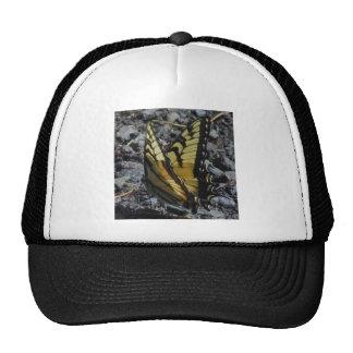 Swallowtail Butterfly Trucker Hats