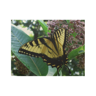 Swallowtail Butterfly I on Milkweed at Shenandoah Wood Poster