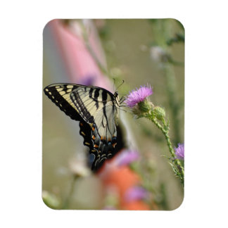 Swallowtail Butterfly in the Blue Ridge Mountains Rectangular Photo Magnet