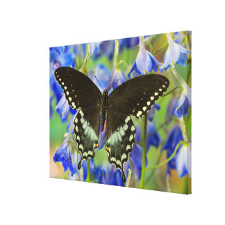 Swallowtail Butterfly on blue Canvas Print