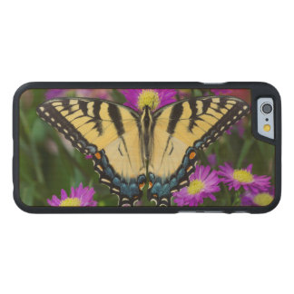 Swallowtail Butterfly on daisy Carved Maple iPhone 6 Case