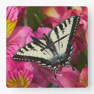 Swallowtail Butterfly on pink Square Wall Clock