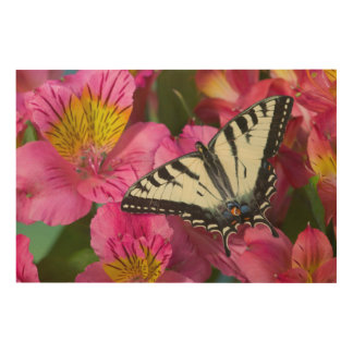 Swallowtail Butterfly on pink Wood Canvases