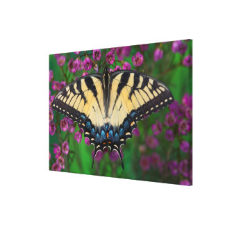 Swallowtail Butterfly on purple Canvas Print