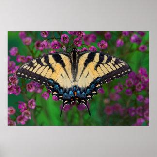 Swallowtail Butterfly on purple Poster