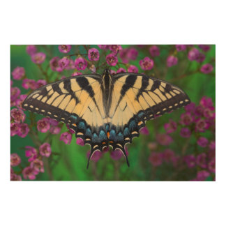 Swallowtail Butterfly on purple Wood Print