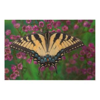 Swallowtail Butterfly on purple Wood Prints