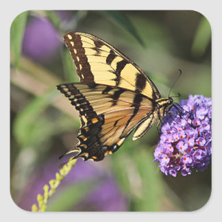 Swallowtail butterfly profile square sticker