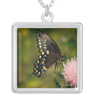 Swallowtail Butterfly Square Pendant Necklace