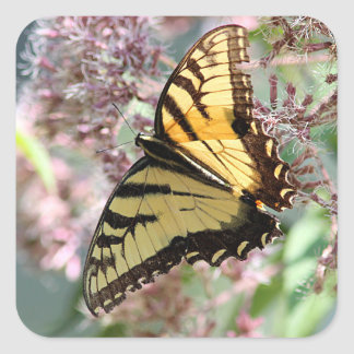 Swallowtail butterfly square sticker