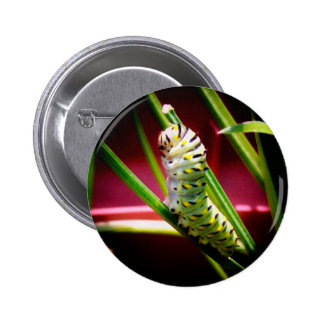 Swallowtail Caterpillar 6 Cm Round Badge