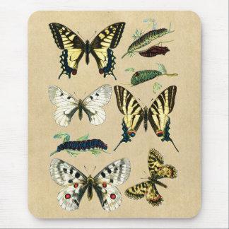 Swallowtail Caterpillars, Butterflies and Moths Mouse Pad