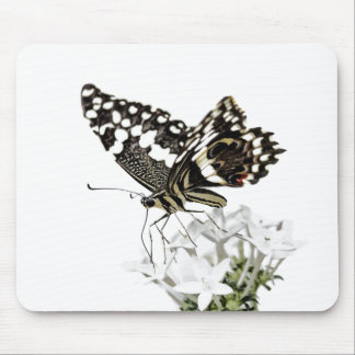 Swallowtail perched in white mouse pad
