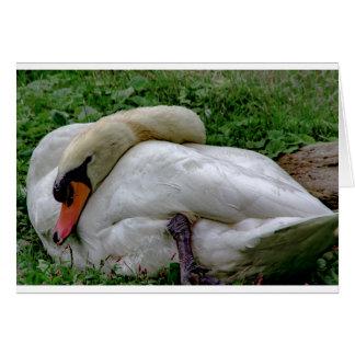 Swan 1 card