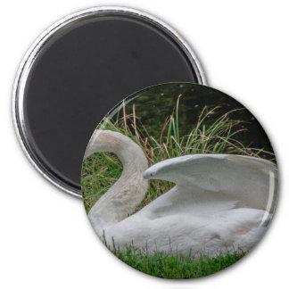 Swan 2 6 cm round magnet