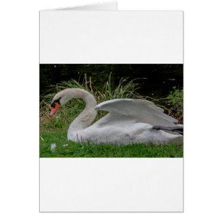 Swan 2 card