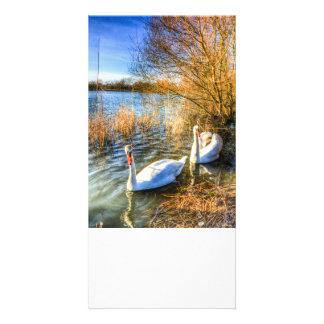 Swan Art Photo Card Template