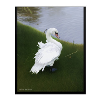 Swan at lake Balaton Acrylic Print