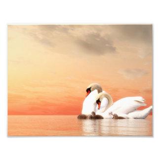 Swan family art photo