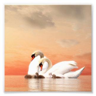 Swan family photo