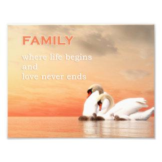 Swan family photo print