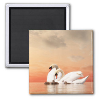 Swan family square magnet