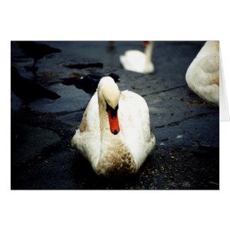 Swan – Galway, Ireland Card