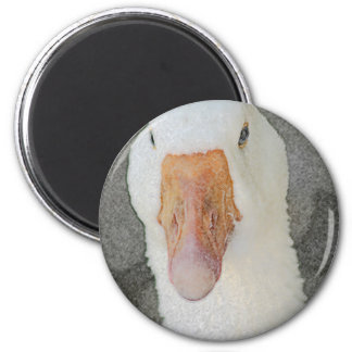 Swan in Pencil 6 Cm Round Magnet
