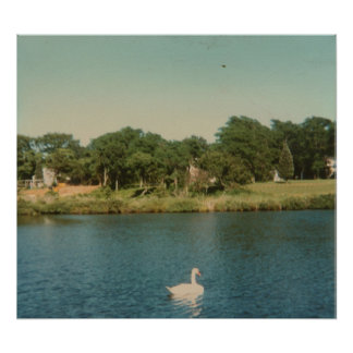 Swan in the Distance Poster