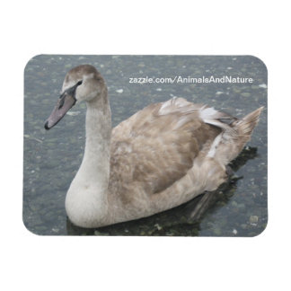 Swan In The Water Magnet