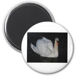 Swan Refrigerator Magnets
