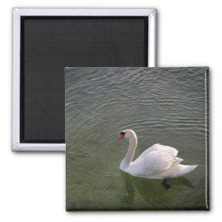 Swan Magnet Refrigerator Magnet